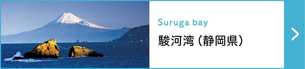 駿河湾(静岡県)